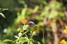 2018 vlinderexcursie